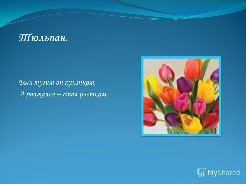 Тюльпан. Был тугим он кулачком, А разжался – стал цветком.