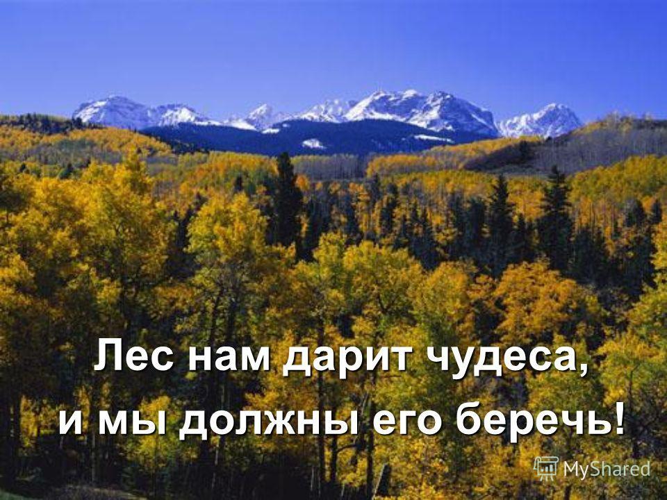 Лес нам дарит чудеса, и мы должны его беречь!