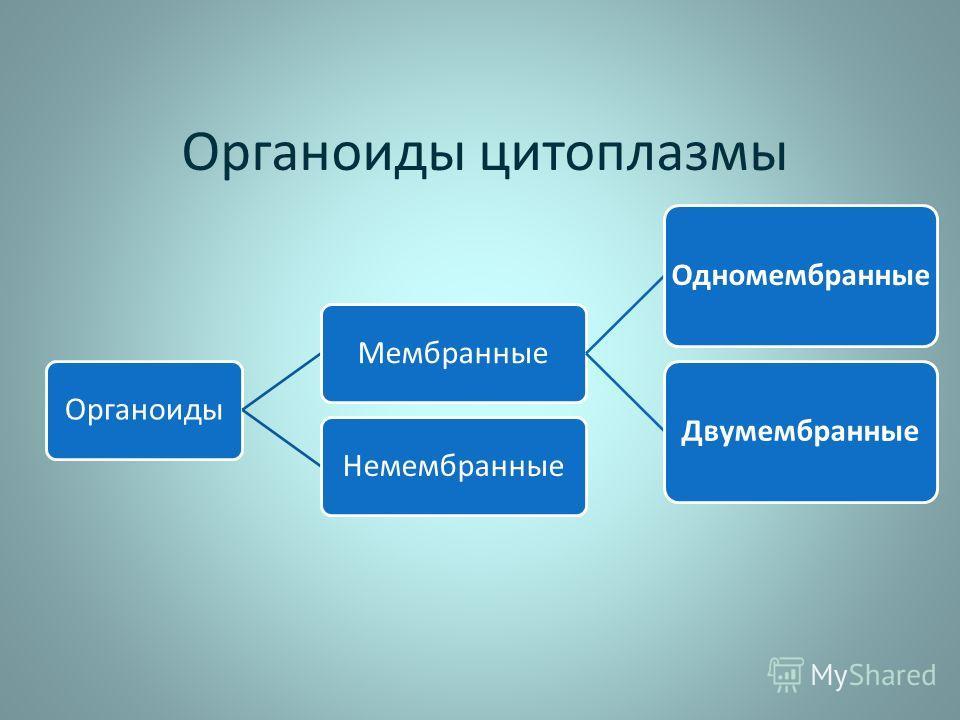 Органоиды цитоплазмы ОрганоидыМембранные ОдномембранныеДвумембранные Немембранные