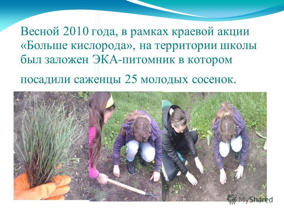 Весной 2010 года, в рамках краевой акции «Больше кислорода», на территории школы был заложен ЭКА-питомник в котором посадили саженцы 25 молодых сосенок.