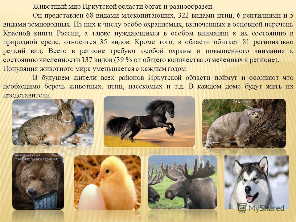 Животный мир Иркутской области богат и разнообразен. Он представлен 68 видами млекопитающих, 322 видами птиц, 6 рептилиями и 5 видами земноводных. Из них к числу особо охраняемых, включенных в основной перечень Красной книги России, а также нуждающих