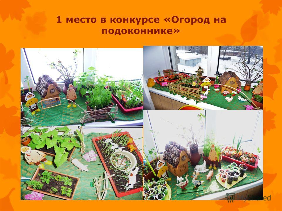 1 место в конкурсе «Огород на подоконнике»