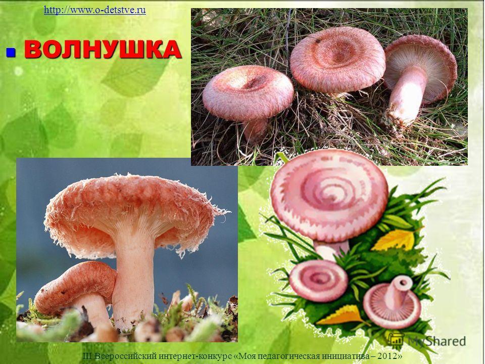 ВОЛНУШКА ВОЛНУШКА http://www.o-detstve.ru III Всероссийский интернет-конкурс «Моя педагогическая инициатива – 2012»