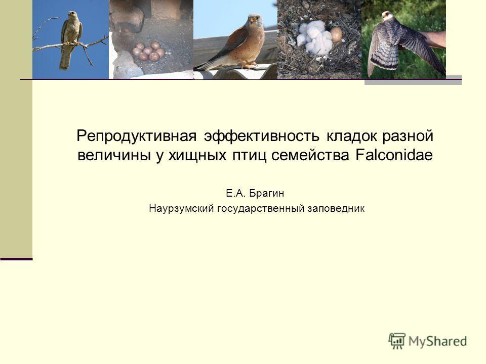 Репродуктивная эффективность кладок разной величины у хищных птиц семейства Falconidae Е.А. Брагин Наурзумский государственный заповедник