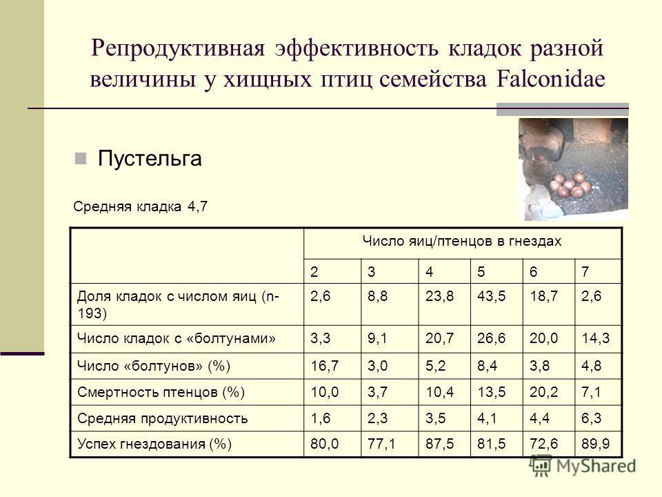 Репродуктивная эффективность кладок разной величины у хищных птиц семейства Falconidae Пустельга Средняя кладка 4,7 Число яиц/птенцов в гнездах 234567 Доля кладок с числом яиц (n- 193) 2,68,823,843,518,72,6 Число кладок с «болтунами»3,39,120,726,620,