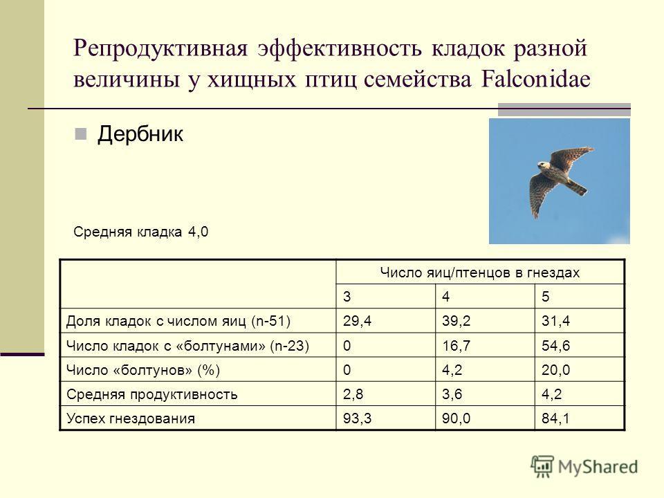 Репродуктивная эффективность кладок разной величины у хищных птиц семейства Falconidae Дербник Средняя кладка 4,0 Число яиц/птенцов в гнездах 345 Доля кладок с числом яиц (n-51)29,439,231,4 Число кладок с «болтунами» (n-23)016,754,6 Число «болтунов»