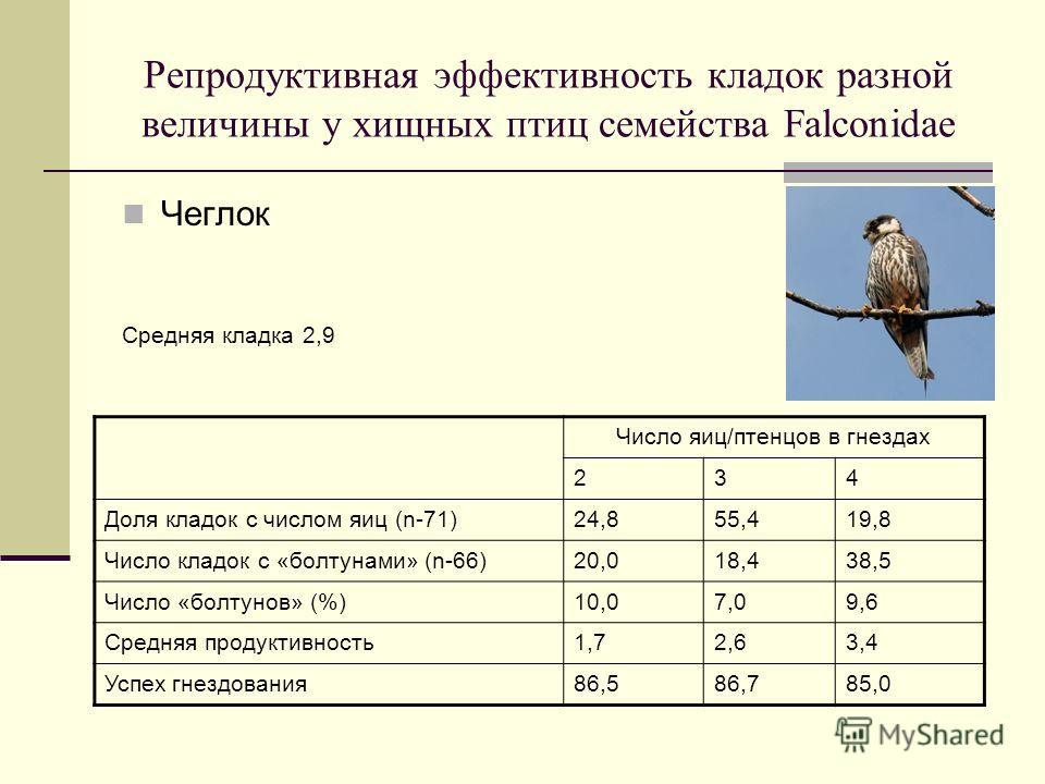 Репродуктивная эффективность кладок разной величины у хищных птиц семейства Falconidae Чеглок Средняя кладка 2,9 Число яиц/птенцов в гнездах 234 Доля кладок с числом яиц (n-71)24,855,419,8 Число кладок с «болтунами» (n-66)20,018,438,5 Число «болтунов