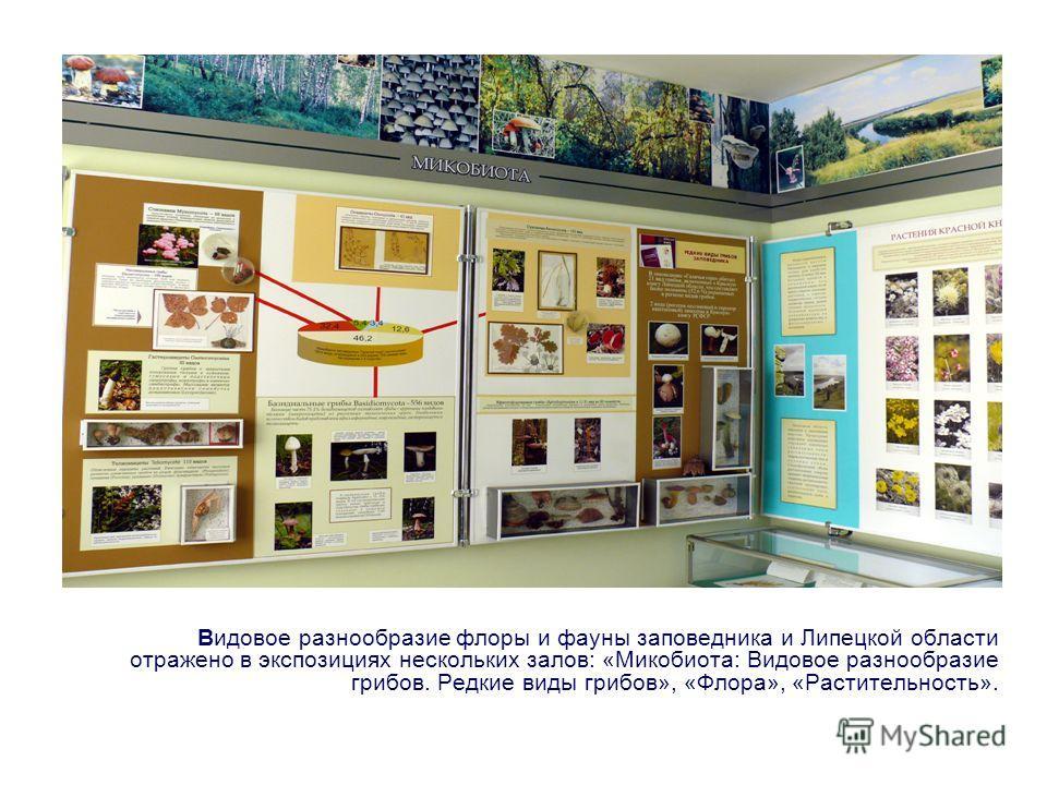 Видовое разнообразие флоры и фауны заповедника и Липецкой области отражено в экспозициях нескольких залов: «Микобиота: Видовое разнообразие грибов. Редкие виды грибов», «Флора», «Растительность».