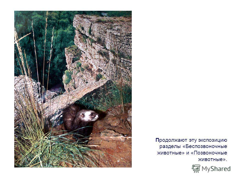 Продолжают эту экспозицию разделы «Беспозвоночные животные» и «Позвоночные животные».