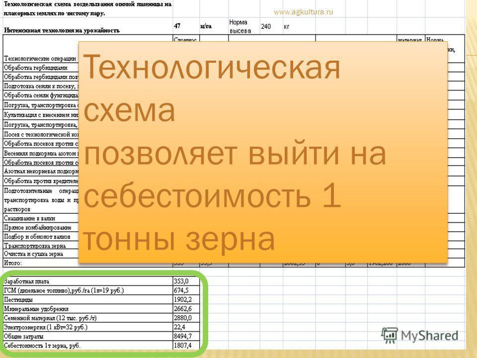 Технологическая схема позволяет выйти на себестоимость 1 тонны зерна Технологическая схема позволяет выйти на себестоимость 1 тонны зерна www.agkultura.ru