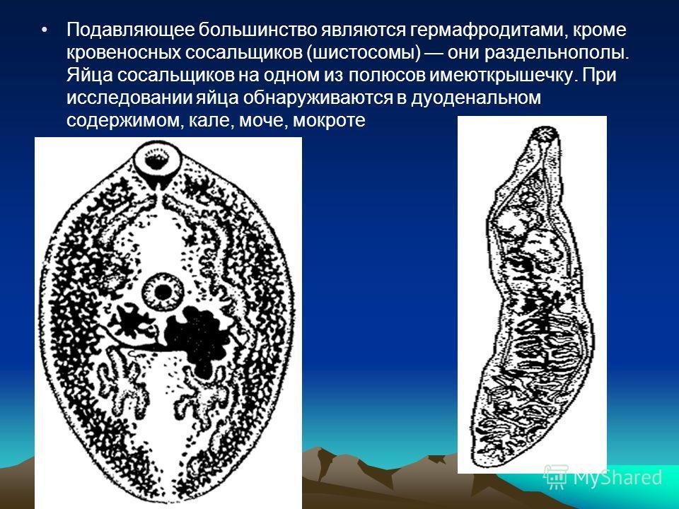 Подавляющее большинство являются гермафродитами, кроме кровеносных сосальщиков (шистосомы) они раздельнополы. Яйца сосальщиков на одном из полюсов имеюткрышечку. При исследовании яйца обнаруживаются в дуоденальном содержимом, кале, моче, мокроте