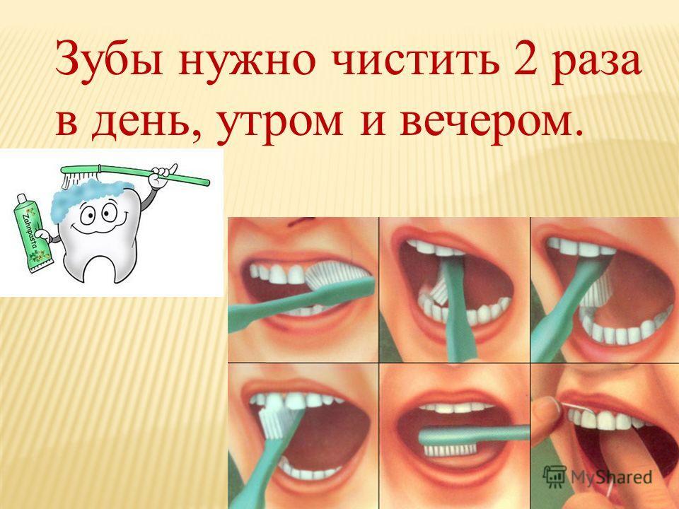 Зубы нужно чистить 2 раза в день, утром и вечером.