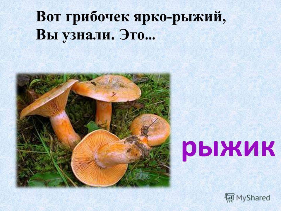 Вот грибочек ярко-рыжий, Вы узнали. Это … рыжик