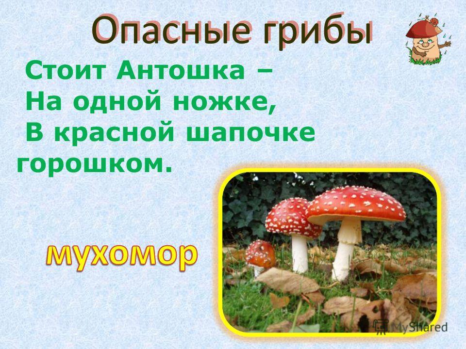 Опасные грибы Стоит Антошка – На одной ножке, В красной шапочке горошком.