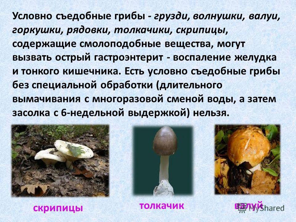 Условно съедобные грибы - грузди, волнушки, валуи, горкушки, рядовки, толкачики, скрипицы, содержащие смолоподобные вещества, могут вызвать острый гастроэнтерит - воспаление желудка и тонкого кишечника. Есть условно съедобные грибы без специальной об