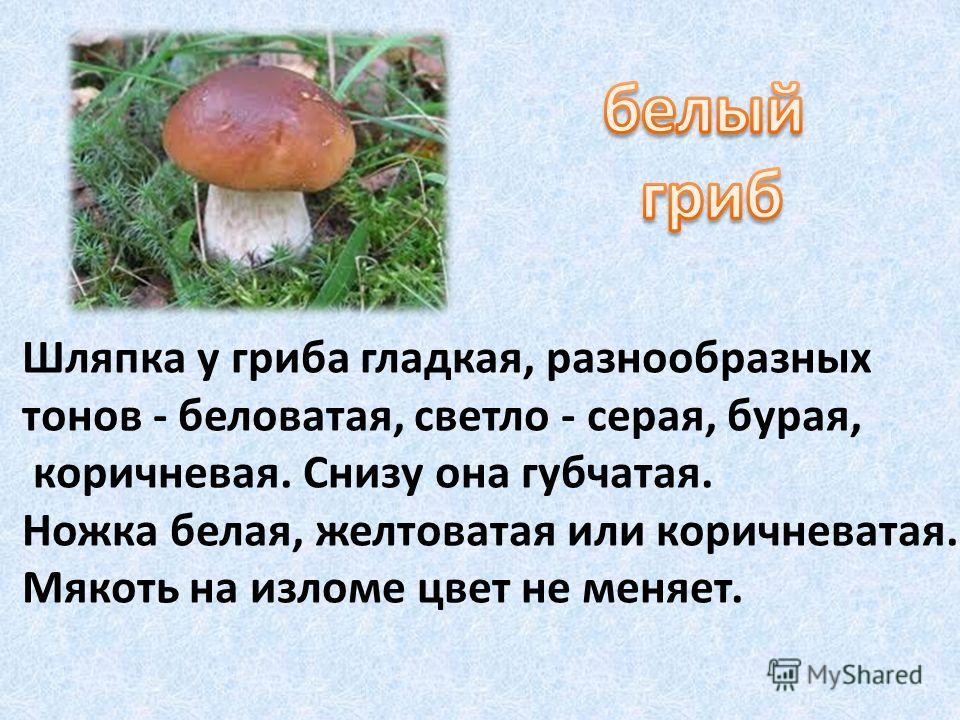 Шляпка у гриба гладкая, разнообразных тонов - беловатая, светло - серая, бурая, коричневая. Снизу она губчатая. Ножка белая, желтоватая или коричневатая. Мякоть на изломе цвет не меняет.