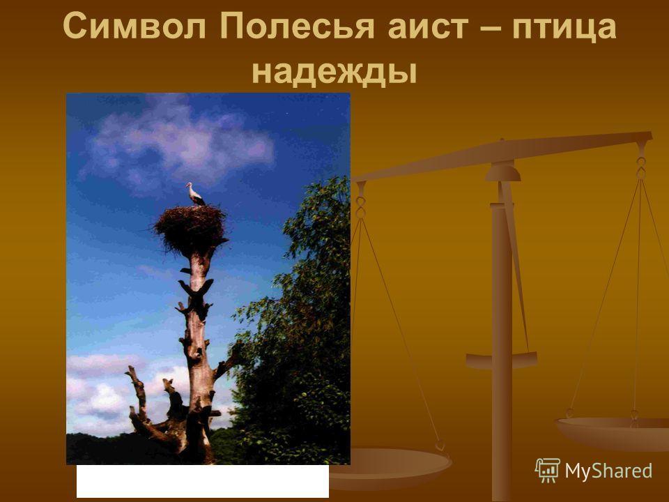 Символ Полесья аист – птица надежды Фото 5. Символ Полесья аист – птица надежды