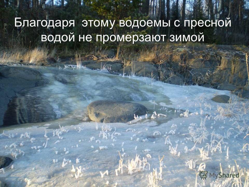 Благодаря этому водоемы с пресной водой не промерзают зимой