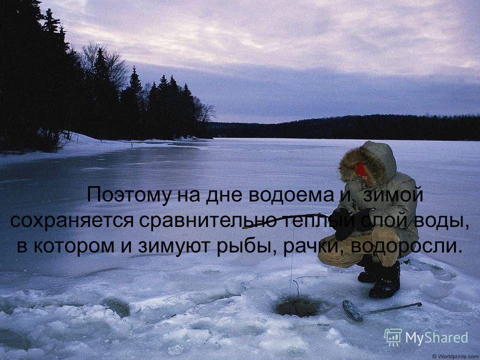 Поэтому на дне водоема и зимой сохраняется сравнительно теплый слой воды, в котором и зимуют рыбы, рачки, водоросли.