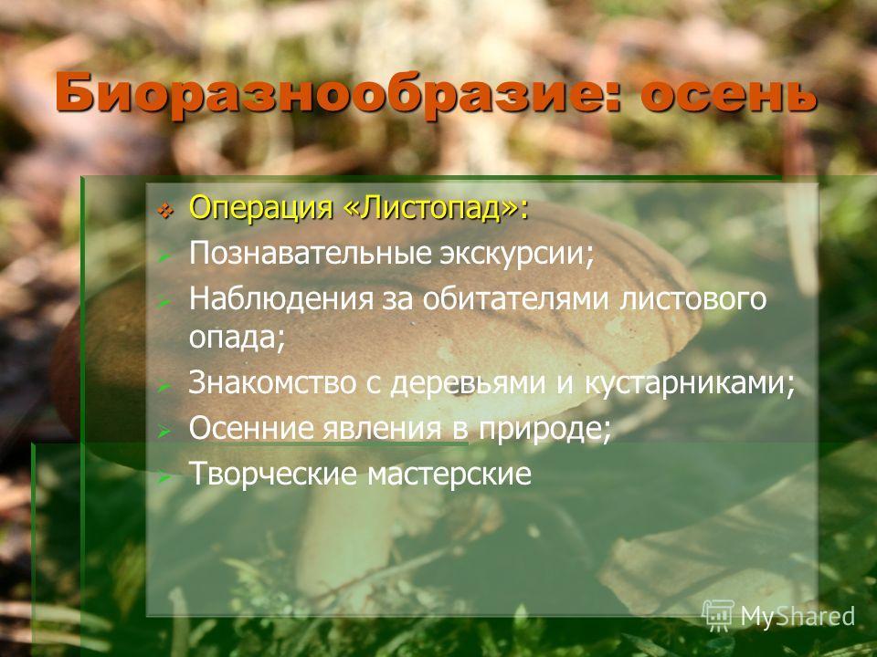 Биоразнообразие: осень Операция «Листопад»: Операция «Листопад»: Познавательные экскурсии; Наблюдения за обитателями листового опада; Знакомство с деревьями и кустарниками; Осенние явления в природе; Творческие мастерские