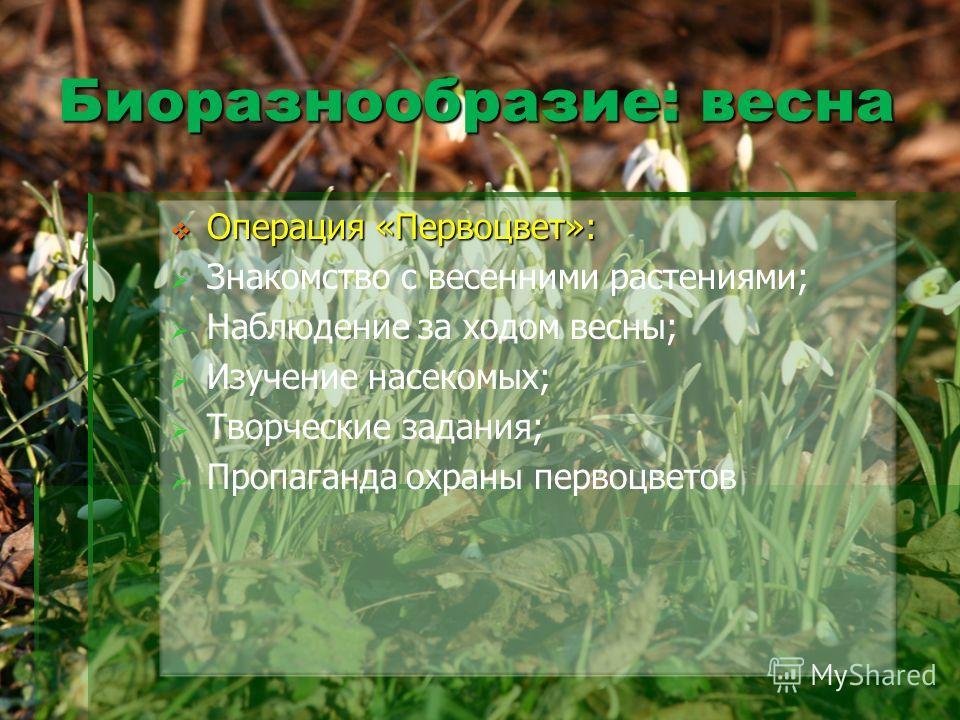 Биоразнообразие: весна Операция «Первоцвет»: Операция «Первоцвет»: Знакомство с весенними растениями; Наблюдение за ходом весны; Изучение насекомых; Творческие задания; Пропаганда охраны первоцветов