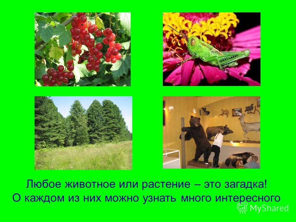 Любое животное или растение – это загадка! О каждом из них можно узнать много интересного