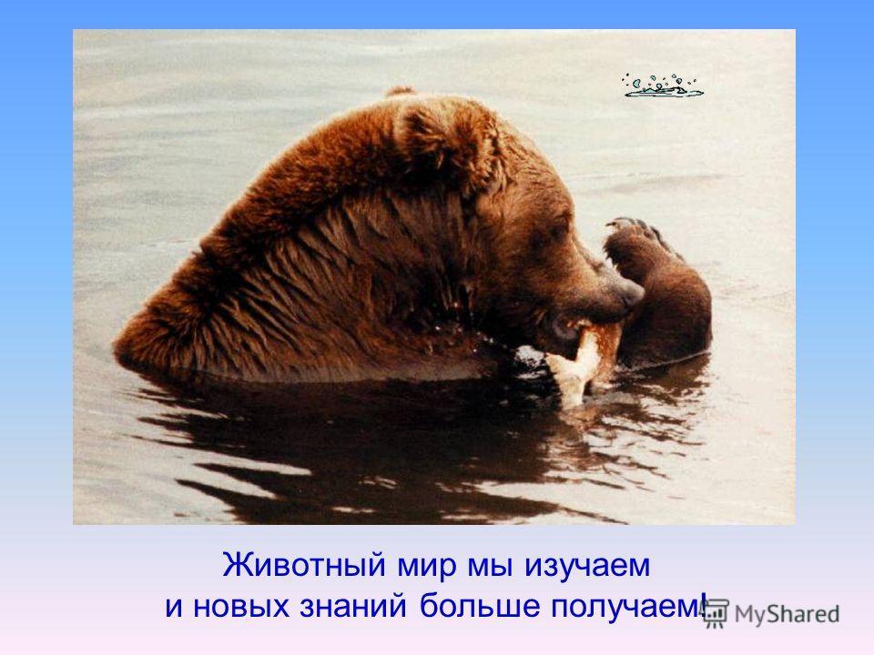 Животный мир мы изучаем и новых знаний больше получаем!