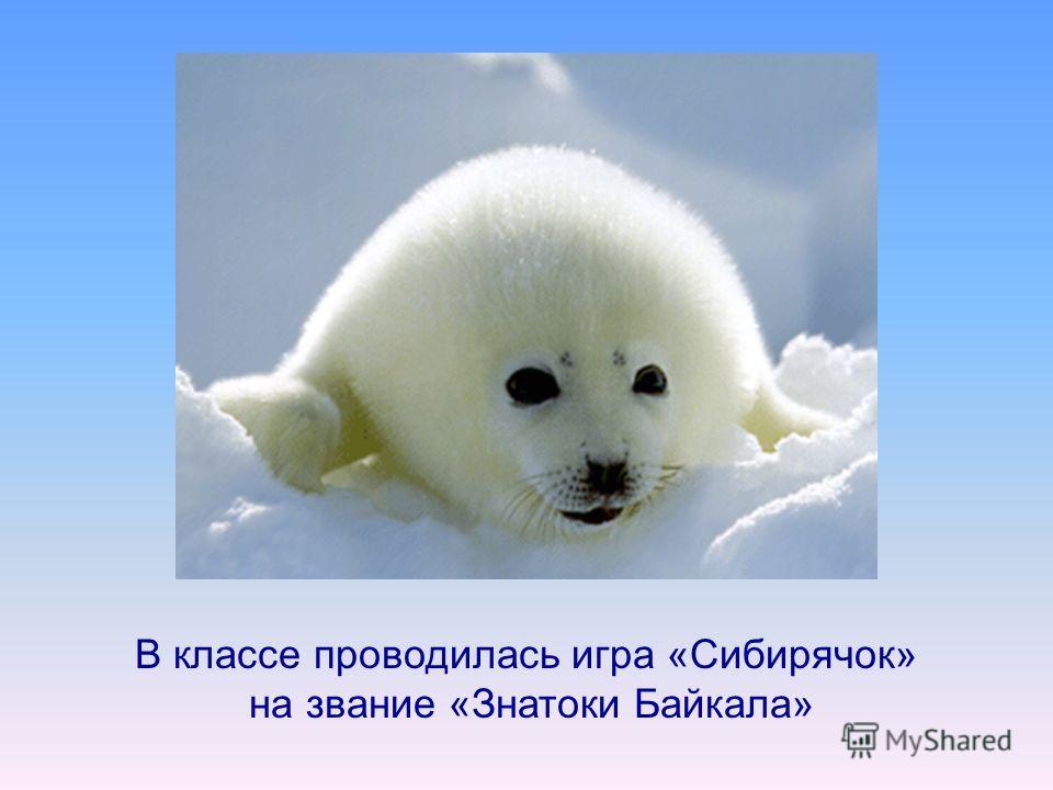 В классе проводилась игра «Сибирячок» на звание «Знатоки Байкала»