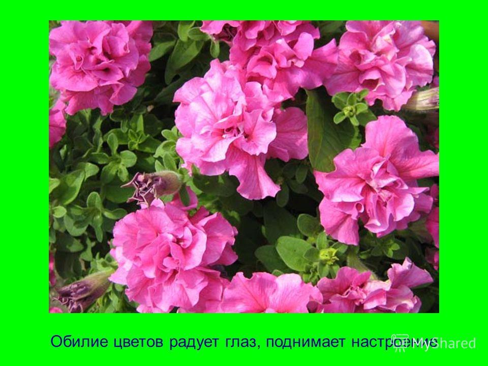 Обилие цветов радует глаз, поднимает настроение