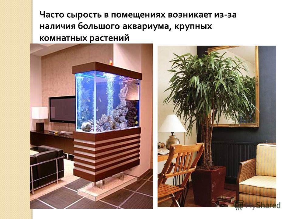 Часто сырость в помещениях возникает из-за наличия большого аквариума, крупных комнатных растений