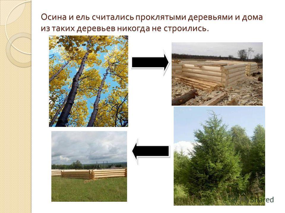 Осина и ель считались проклятыми деревьями и дома из таких деревьев никогда не строились.