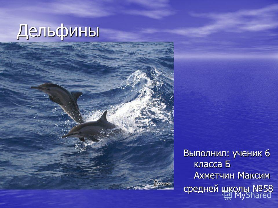 Дельфины Выполнил: ученик 6 класса Б Ахметчин Максим средней школы 58