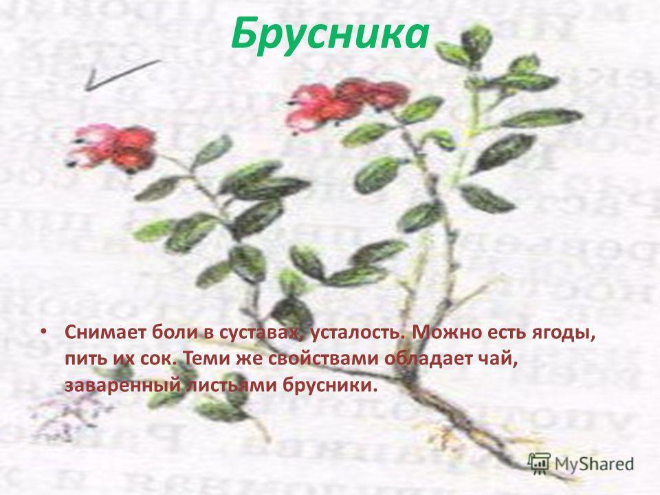 Брусника Снимает боли в суставах, усталость. Можно есть ягоды, пить их сок. Теми же свойствами обладает чай, заваренный листьями брусники.
