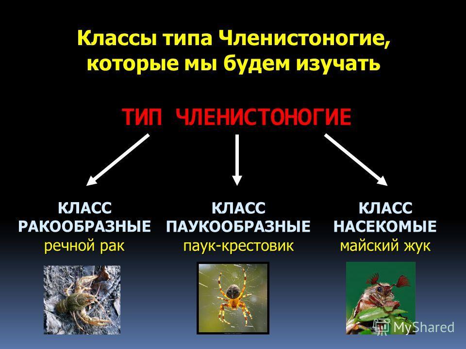 ТИП ЧЛЕНИСТОНОГИЕ КЛАСС РАКООБРАЗНЫЕ речной рак Классы типа Членистоногие, которые мы будем изучать КЛАСС ПАУКООБРАЗНЫЕ паук-крестовик КЛАСС НАСЕКОМЫЕ майский жук