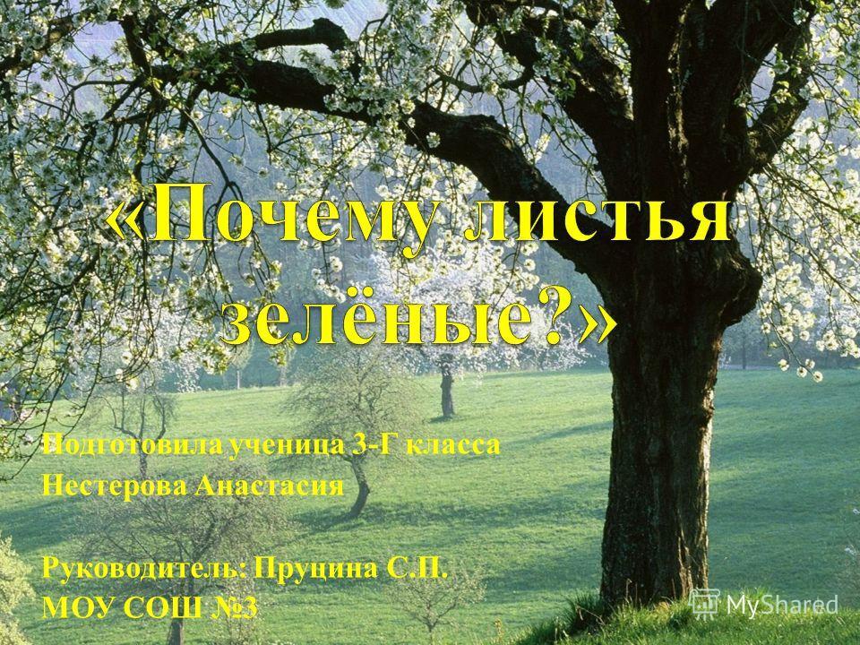 Подготовила ученица 3-Г класса Нестерова Анастасия Руководитель: Пруцина С.П. МОУ СОШ 3