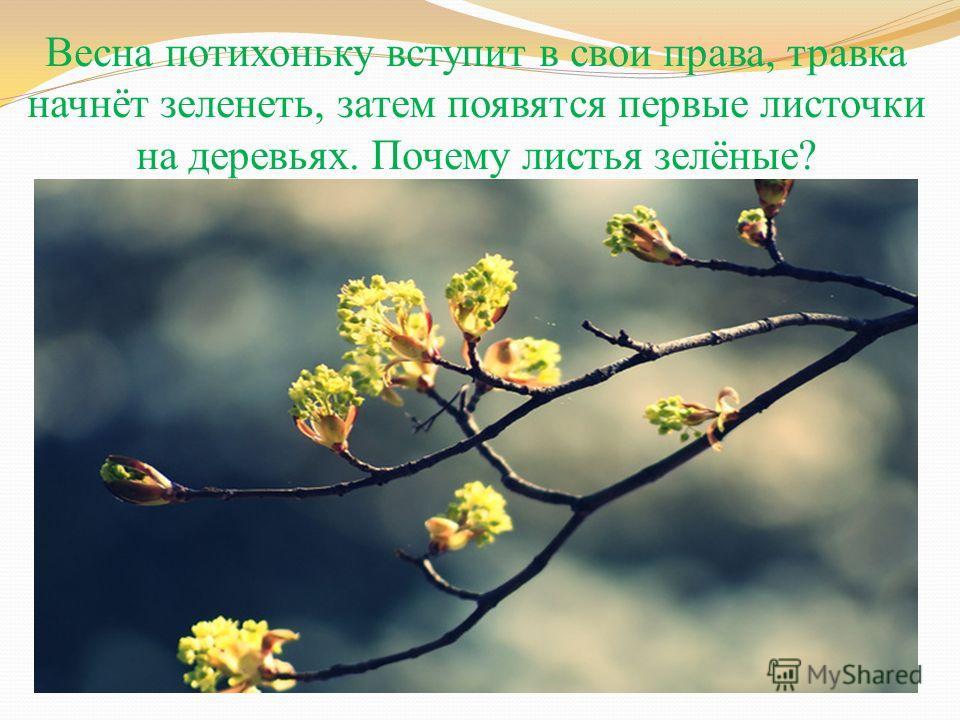 Весна потихоньку вступит в свои права, травка начнёт зеленеть, затем появятся первые листочки на деревьях. Почему листья зелёные?
