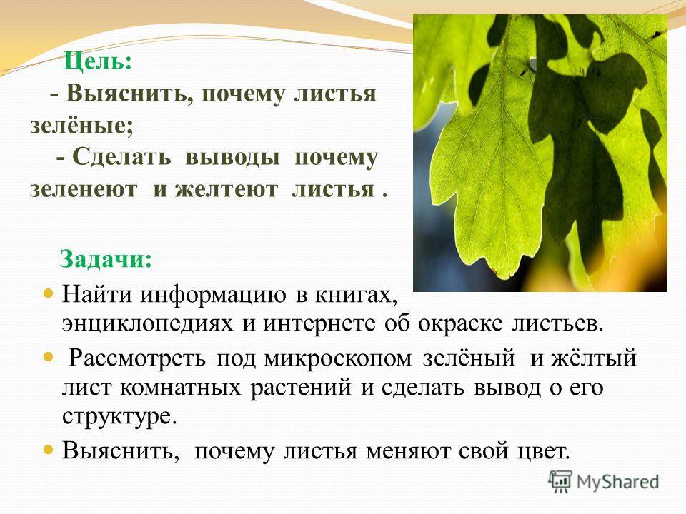Цель: - Выяснить, почему листья зелёные; - Сделать выводы почему зеленеют и желтеют листья. Задачи: Найти информацию в книгах, энциклопедиях и интернете об окраске листьев. Рассмотреть под микроскопом зелёный и жёлтый лист комнатных растений и сделат