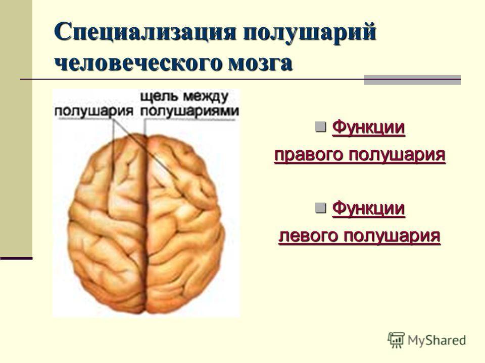 Специализация полушарий человеческого мозга Функции Функции Функции правого полушария правого полушария Функции Функции Функции левого полушария левого полушария