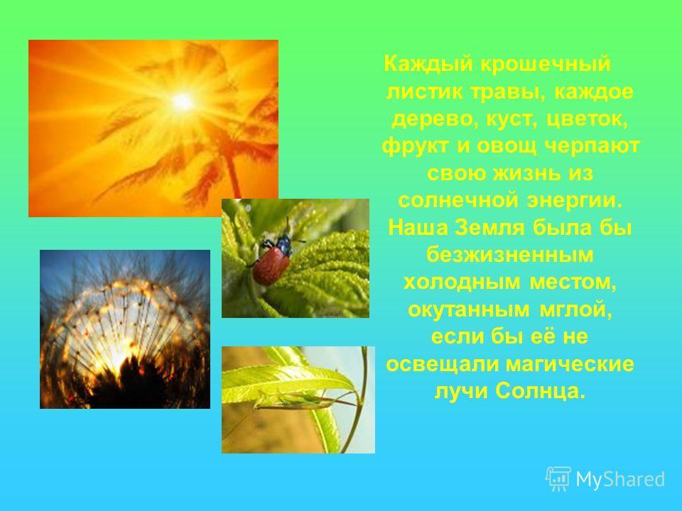 Каждый крошечный листик травы, каждое дерево, куст, цветок, фрукт и овощ черпают свою жизнь из солнечной энергии. Наша Земля была бы безжизненным холодным местом, окутанным мглой, если бы её не освещали магические лучи Солнца.