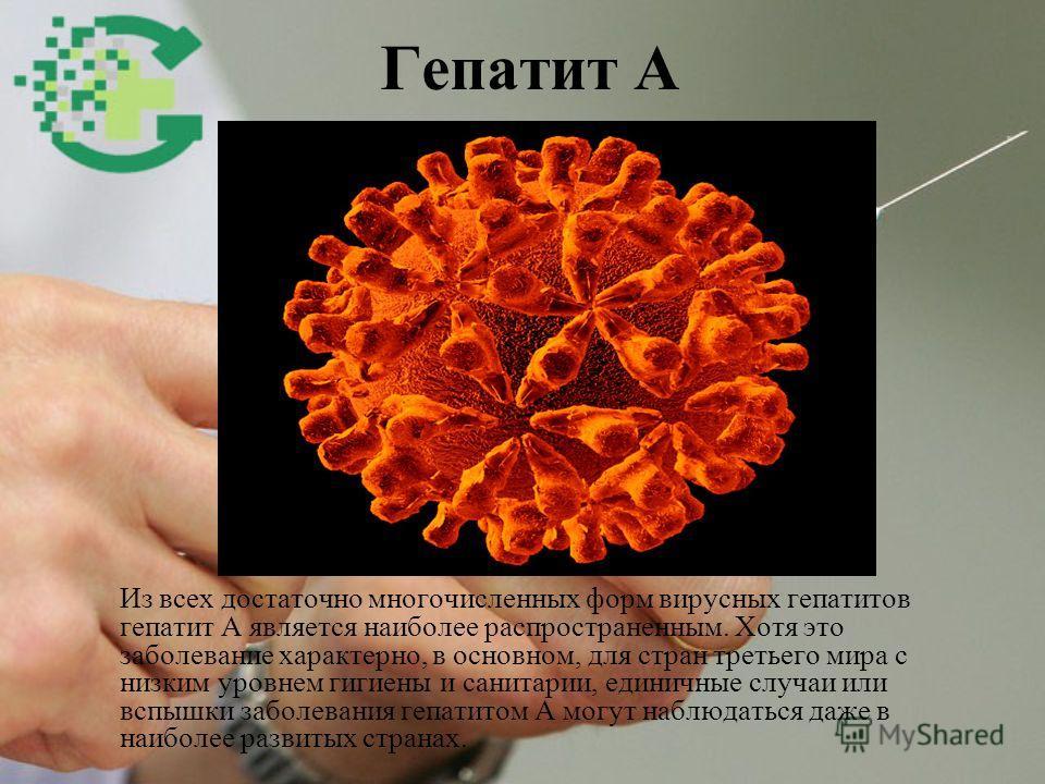 Гепатит А Из всех достаточно многочисленных форм вирусных гепатитов гепатит А является наиболее распространенным. Хотя это заболевание характерно, в основном, для стран третьего мира с низким уровнем гигиены и санитарии, единичные случаи или вспышки