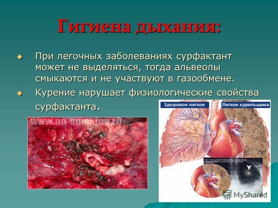 Гигиена дыхания: При легочных заболеваниях сурфактант может не выделяться, тогда альвеолы смыкаются и не участвуют в газообмене. При легочных заболеваниях сурфактант может не выделяться, тогда альвеолы смыкаются и не участвуют в газообмене. Курение н