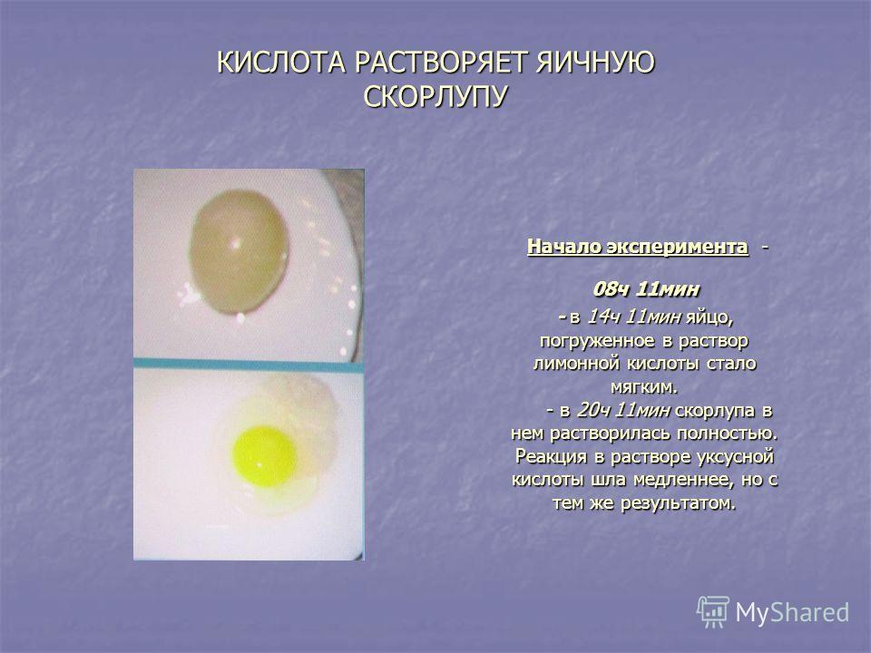 Начало эксперимента - 08ч 11мин - в 14ч 11мин яйцо, погруженное в раствор лимонной кислоты стало мягким. - в 20ч 11мин скорлупа в нем растворилась полностью. Реакция в растворе уксусной кислоты шла медленнее, но с тем же результатом. Начало экспериме