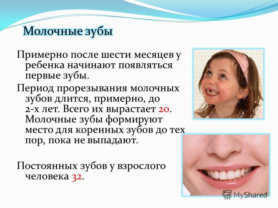 Примерно после шести месяцев у ребенка начинают появляться первые зубы. Период прорезывания молочных зубов длится, примерно, до 2-х лет. Всего их вырастает 20. Молочные зубы формируют место для коренных зубов до тех пор, пока не выпадают. Постоянных