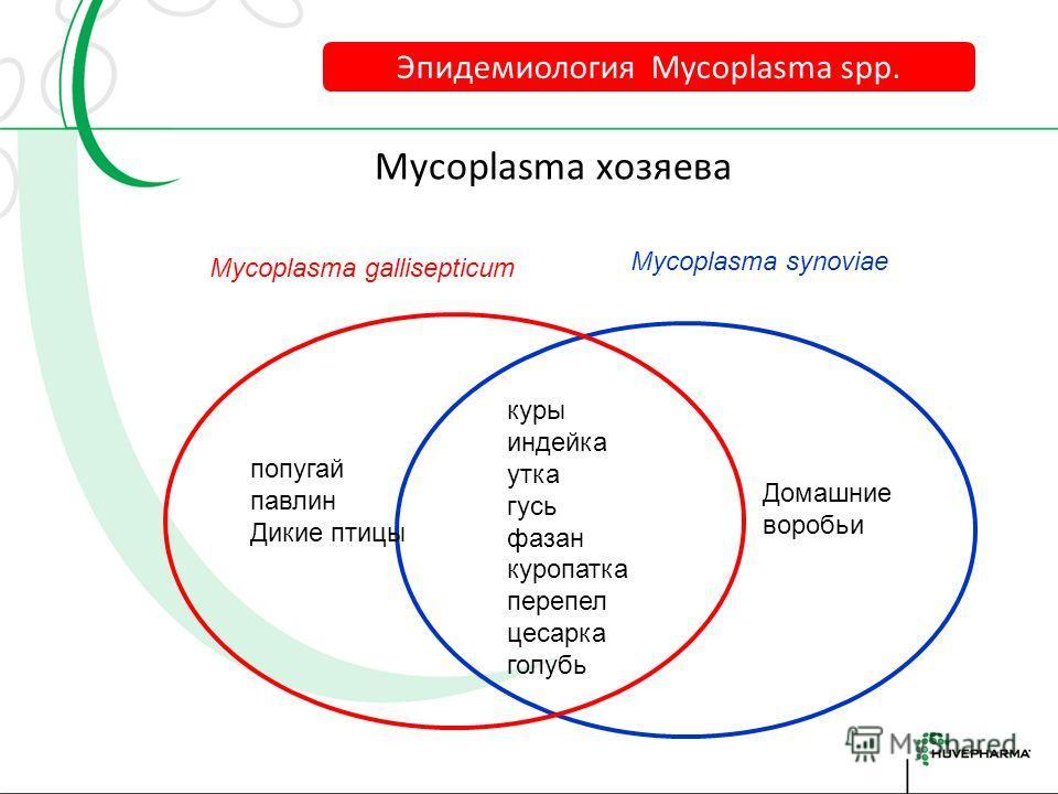 Время жизни Mycoplasma gallisepticum вне хозяина Эпидемиология Mycoplasma spp.