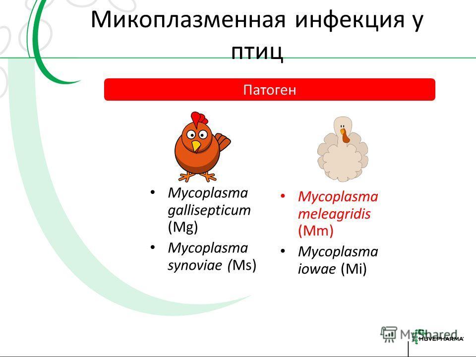 Микоплазмоз птиц и меры борьбы Преображенский Георгий продукт-менеджер по ветеринарным препаратам компании HUVEPHARMA