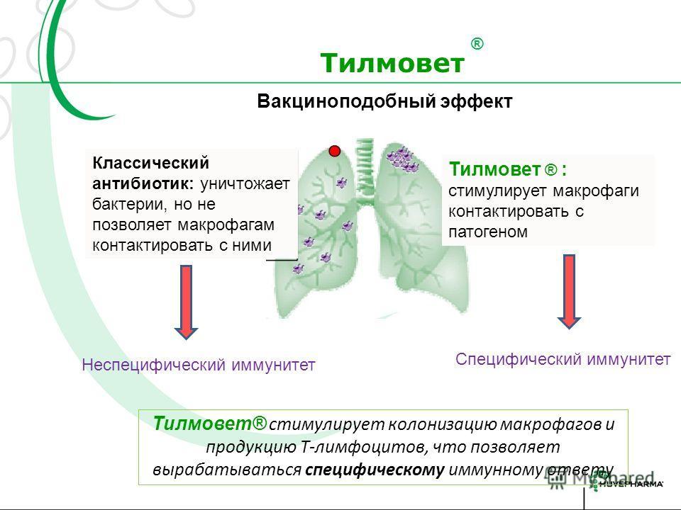 С Тилмоветом С обычным антибиотиком Зачастую не патоген, а аутоиммунная реакция (за счет избыточной реакции иммунной системы) приводит к разрушению тканей в очаге воспаления Тилмовет Противовоспалительный эффект за счет ингибирования продукции ИЛ8 и