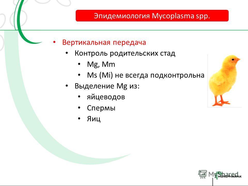 Эпидемиология Mycoplasma spp. Родительские стада Инкубатор Загрязнённый воздух? Посетители Дикие птицы Инфицированная птица Инфицированный материал