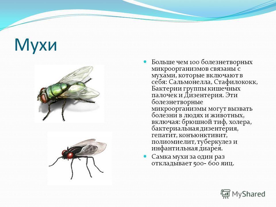 Мухи Больше чем 100 болезнетворных микроорганизмов связаны с мухами, которые включают в себя: Сальмонелла, Стафилококк, Бактерии группы кишечных палочек и Дизентерия. Эти болезнетворные микроорганизмы могут вызвать болезни в людях и животных, включая