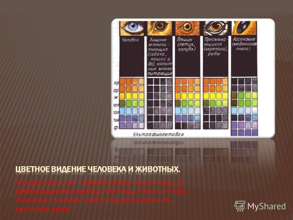Эти таблицы помогают определить нарушение цветоощущения. В таблице 1 люди с нормальным зрением или врожденным расстройством видят число 16 Люди с приобретенным расстройством зрения с трудом или вовсе не различают число 96 в таблице 2. Видят это число