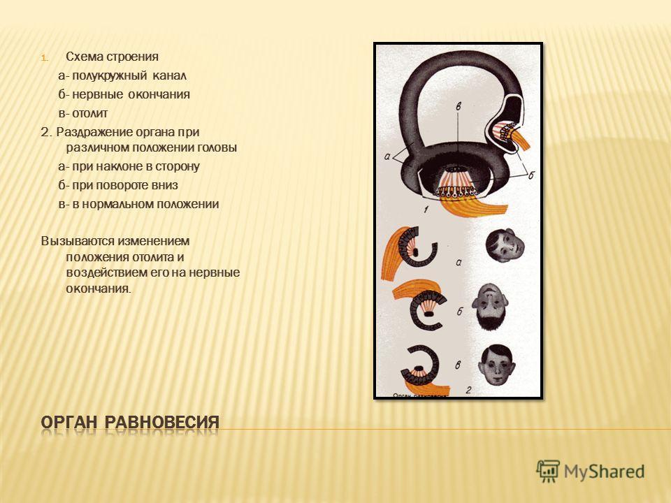 Сильные и непрерывные раздражения переутомляют слух. Под влиянием шума возникает бессонница, быстрая утомляемость. Длительное воздействие шума является одним из факторов, способствующих развитию язвенной и гипертонической болезней. Отдых в тиши полей